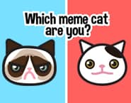 Which meme cat are you