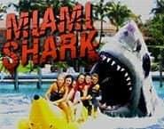 Uno squalo a Miami